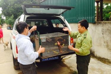 Trung tâm Cứu hộ, bảo tồn và Phát triển sinh vật tiếp nhận động vật hoang dã quý hiếm để cứu hộ